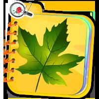 Quizy o roślinach - ćwiczenia online - ZdobywcyWie