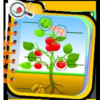 Gry online o roślinach - ćwiczenia z przyrody - Zd