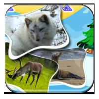 Fauna Arktyki - Zwierzęta Arktyki - Zdobywcy Wiedz