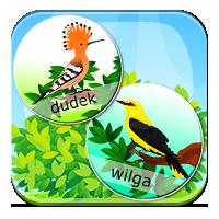 Ptaki przylatujące na wiosnę - Wędrówki ptaków - Z