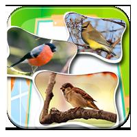 Nazwy ptaków dla dzieci - Układamy nazwy ptaków -